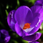 Spring Pollen Poster