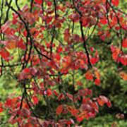 Spring Rain In Descanso Gardens Poster