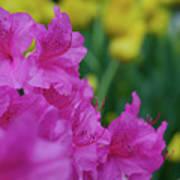 Spring Series #06 Poster