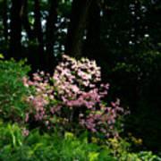 Spring Spotlight Poster