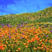 Spring Superbloom In Walker Canyon Poster