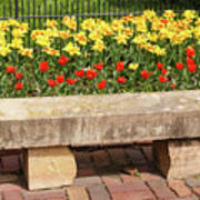 Spring Surrounds The Bench Poster