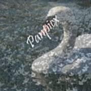 Spring Swan Poster