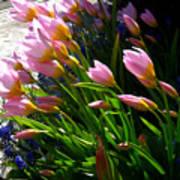 Spring Tenderness Poster