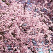 Spring Trees Art Prints Pink Springtime Blossoms Baslee Troutman Poster