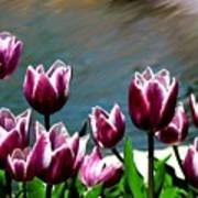 Spring Tulips 1 Poster
