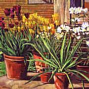 Spring Tulips And White Azaleas Poster