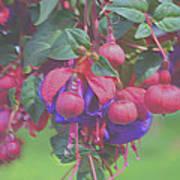 Spring Color Bursts Poster