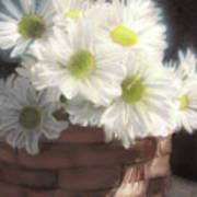 Spring White Daisies Poster by Melissa Herrin