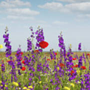 Spring Wild Flowers Meadow Poster