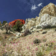 Springtime At Red Rock Canyon Poster