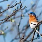 Springtime Blue Poster