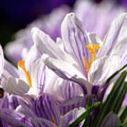 Springtime Color Poster