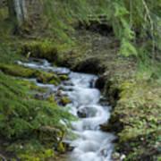Springtime Creek Poster