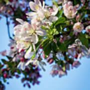 Springtime In Bloom Poster