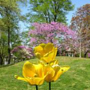 Springtime In Bridgeton Missouri Poster