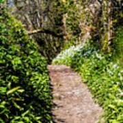 Springtime In Dorset Poster