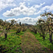 Springtime In The Apple Grove Poster