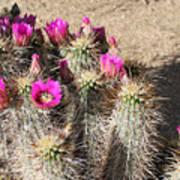 Springtime In The Desert Poster
