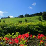 Springtime Landscape Poster