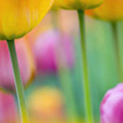 Springtime Poster by Silke Magino