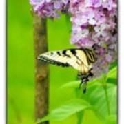 Springtime Splendor Poster