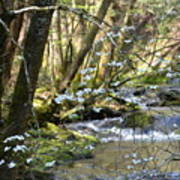 Springtime Stream In The Smokies Poster