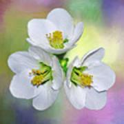 Springtime Triplets By Kaye Menner Poster