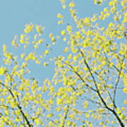 Sprint Blossom  Poster