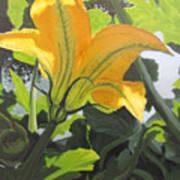 Squash Blossom Poster