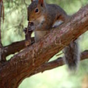 Squirrel 2 Poster