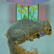 Squirrel At The Bird Feeder Poster