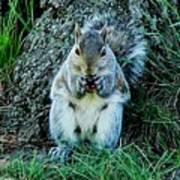 Squirrel Friend Poster