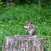 Squirrel Having Lunch Poster