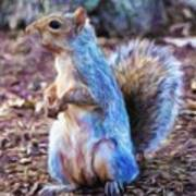 Squirrel - Id 16218-130716-8114 Poster