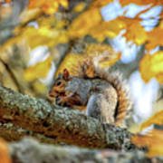 Squirrel In Autumn Poster