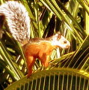 Squirrel In Palm Tree Poster