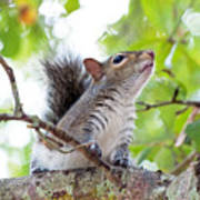 Squirrel With Personality Poster