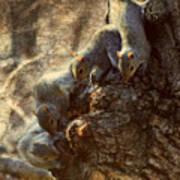 Squirrels - A Family Affair Xi Poster