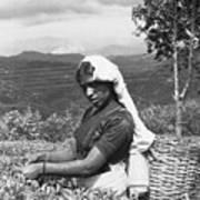 Sri Lanka Tea Plantation Poster