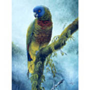 St. Lucia Parrot - Majestic Poster