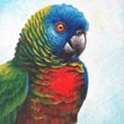 St. Lucia Parrot Poster