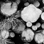 Stacked Wood Logs In Black And White Poster
