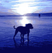 Staffordshire Bull Terrier On Beach Poster by Michael Tompsett