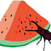 Stag Beetle Is Eating A Piece Of Red Watermelon Poster