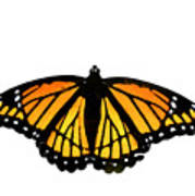 Stained Glass Wings Poster