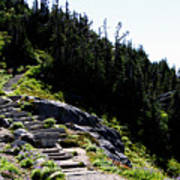 Stairs Along Skyline Trail Poster