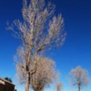 Standing Tree  Despite Poster