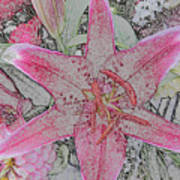 star Flower as Pencil Sketch Poster