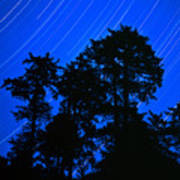 Star Trails Behind Ruby Beach Tree Group Poster